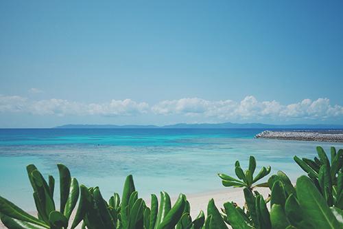 「リゾート」「南国」「夏」「植物」「海」「空」などがテーマのフリー写真画像