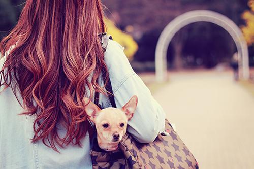 キャリーに入れられている可愛い犬と飼い主の女の子