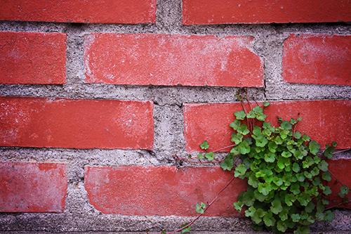 レンガでできた花壇の壁とその下に生えるオシャレなグリーン