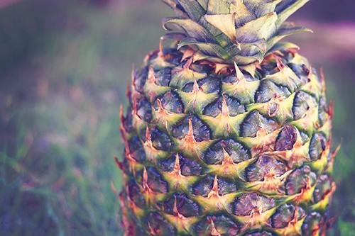 「パイナップル」「フルーツ」「夏」「植物」などがテーマのフリー写真画像