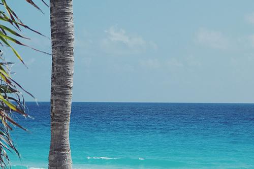 目の前に広がるエメラルドグリーンの海とヤシの木