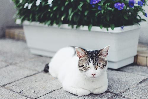 みちばたで気持ち良さそうにお昼寝する猫🐱
