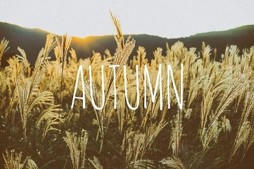 「ススキ」「文字入り」「植物」「秋」などがテーマのフリー写真画像
