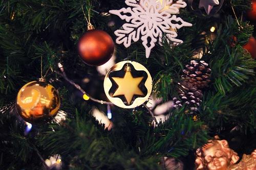 「オーナメント」「クリスマスツリー」「植物」などがテーマのフリー写真画像