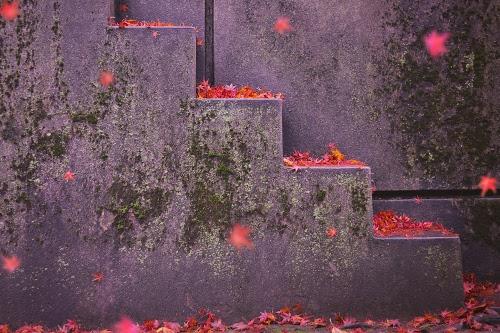 フリー写真素材:まるで芸術作品のような落ち葉の階段