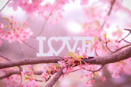 フリー写真素材:桜の木の上に置かれて春の訪れを感じさせるLOVEプレート