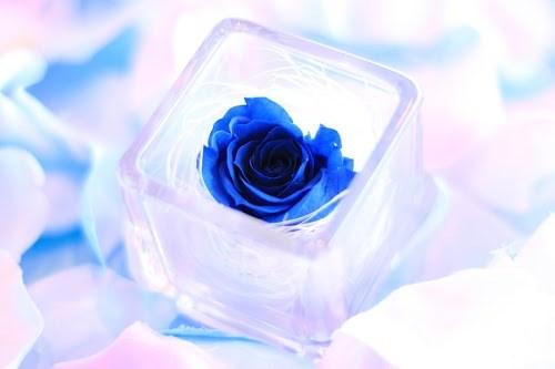 青いバラのプリザーブドフラワーの画像おしゃれなフリー写真素材