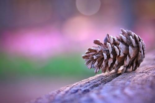 「冬」「春」「植物」などがテーマのフリー写真画像