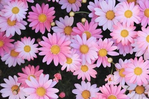 ふたつだけ儚く咲く梅の花