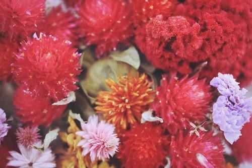 「ドライフラワー」「女性・女の子」「母の日」「花」「花束」などがテーマのフリー写真画像
