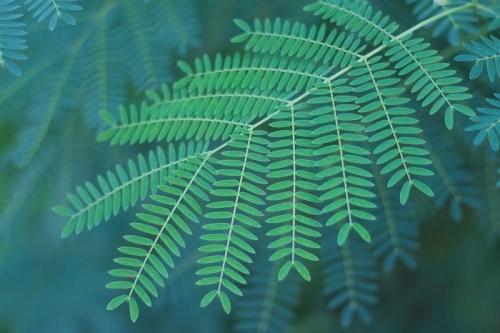 「ジャングル」「リゾート」「南国」「夏」「植物」などがテーマのフリー写真画像