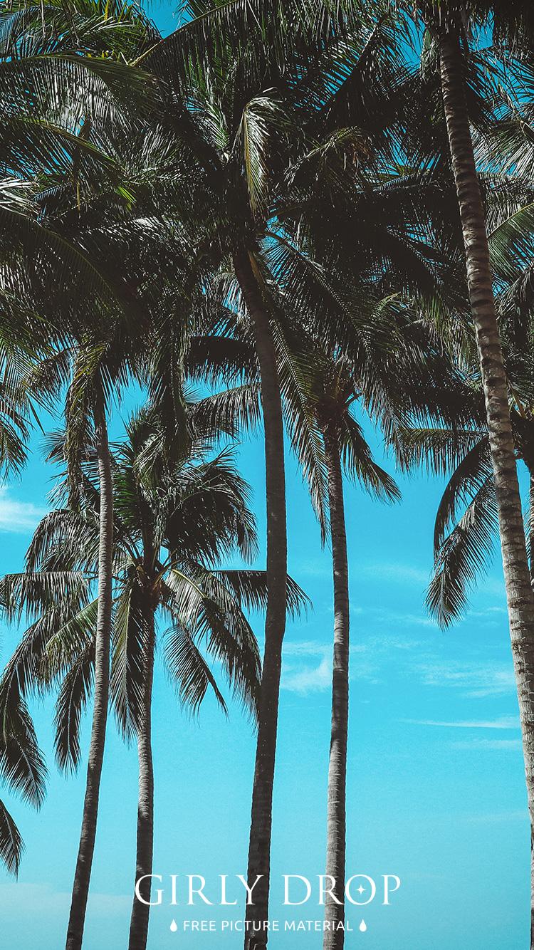 おしゃれなiphone壁紙 たくさんのヤシの木と夏の青い空のiphone スマホ 壁紙 おしゃれなフリー写真素材 Girly Drop