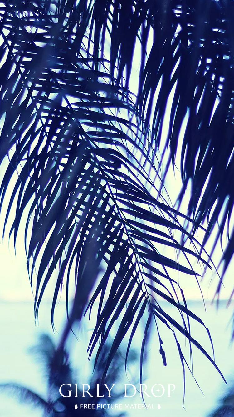 おしゃれなiphone壁紙 ヤシの木ごしに眺める夏の海のiphone スマホ 壁紙 おしゃれなフリー写真素材 Girly Drop