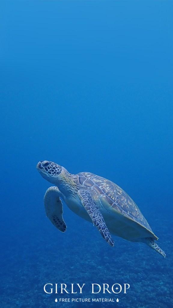 おしゃれなフリーのスマホ壁紙(待受け):【おしゃれなiPhone壁紙】宮古島のダイビング中に出会った亀