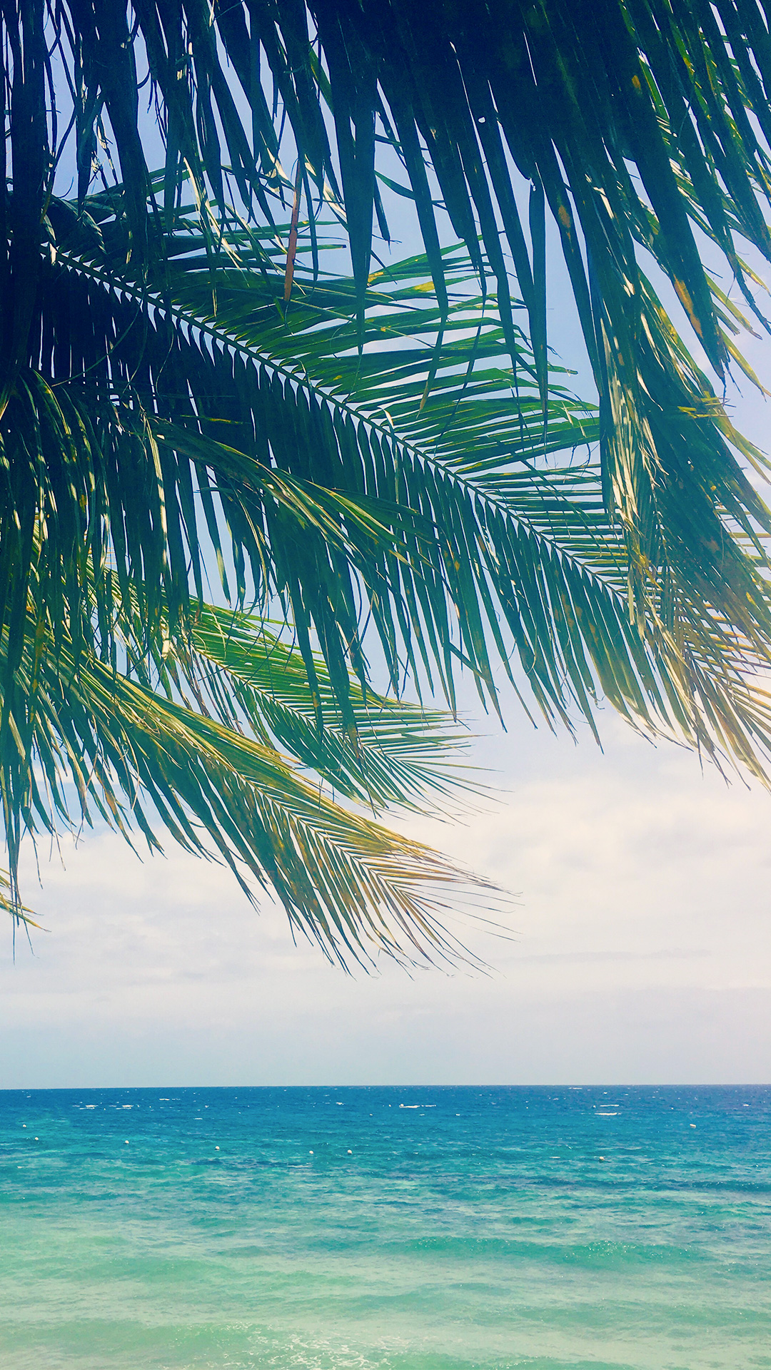 オシャレなiphone壁紙 南国の気分にひたれるヤシの木の葉っぱごしの青い海のiphone スマホ 壁紙 おしゃれなフリー写真素材 Girly Drop