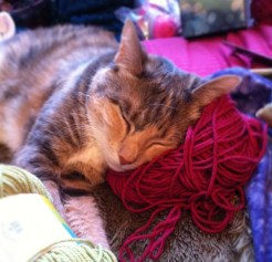 ezzy sleeping on a yarn ball