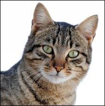 Cat03_1