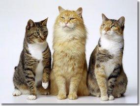 Cat05_1