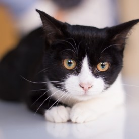 Cati – CatWoman