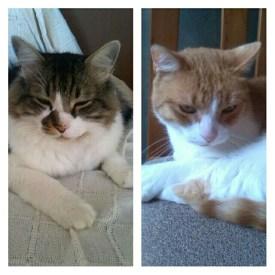 Tigre i Petit