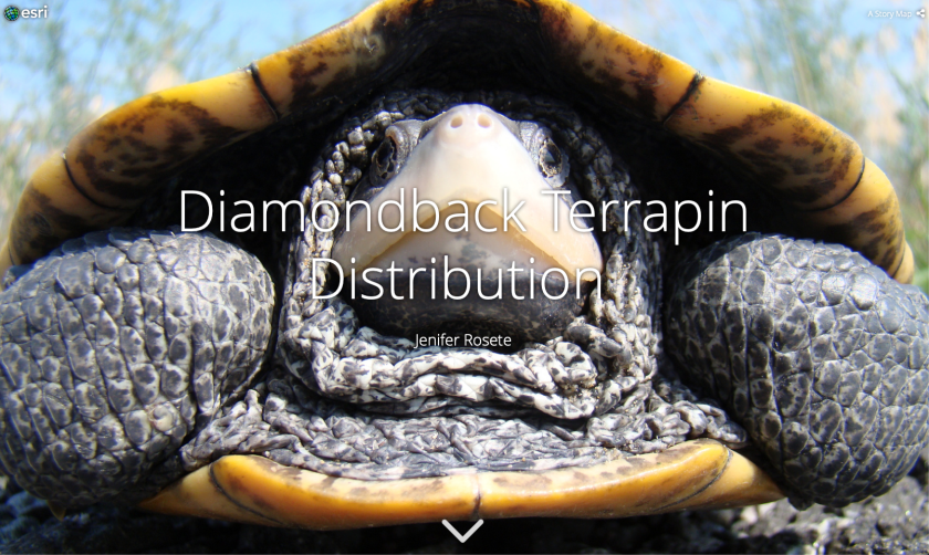 Diamondback Terrapin Distribution - Jenifer Rosete - RIT