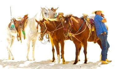 Horses, Cabo San Lucas