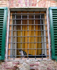 Cat in the Window, Arezzo, Italy