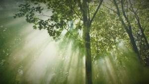 Forest LiDAR