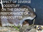 STUDIES ON THE EFFECT OF DIVERSE FOODSTUFF ON THE GROWTH PERFORMANCE OF GRASSCUTTER (THRYONOMYS SWINDERIANUS) IN CAPTIVITY. pdf