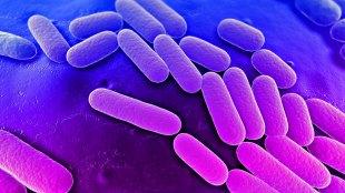 bakteri, superbug, jenis, tiga, resisten, antibiotik, daging, ayam, amerika, serikat, risiko, kematian, patogen, lemah, pasien, rumah, sakit, alat, medis, kontak, hubungan, rendah, imun, tubuh, sistem, anak-anak, dewasa, organik