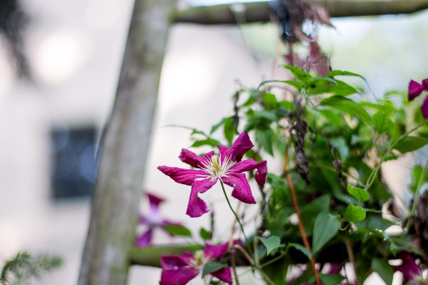 location-gite-jardins-les-hortensias-du-haut-bois