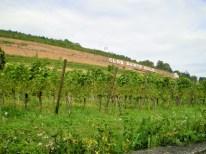 Clos sainte Odile sur la route des vins à Obernai
