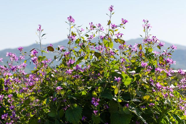 La beauté des fleursd'ArdèchesurleDomaineRouretord