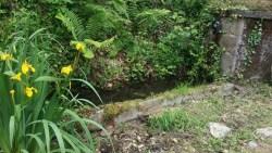 Découverte d'un petit biotope au Moulin de Record avec des Nénuphars et tritons