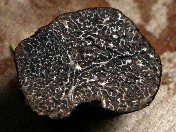 Truffe noir des Charentes