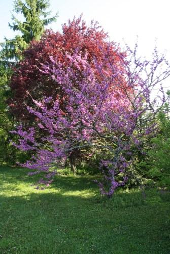 Le printemps s'épanouit à La Reculée