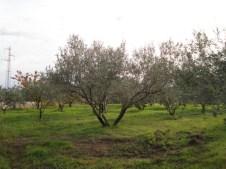 paysages-ardechois-dsc00279