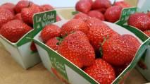 Les fraises de Wépion