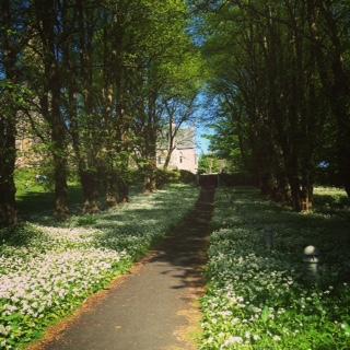 Isle of Cumbrae Trees