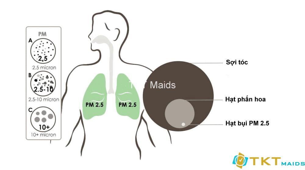 Bụi mịn PM 2.5 đi sâu vào phổi như thế nào