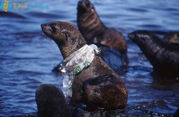 Hình ảnh: Rác thải nhựa cuốn vào động vật biển