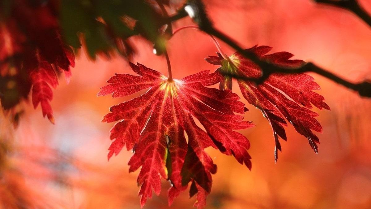 Read more about the article Le foglie e i colori dell'autunno