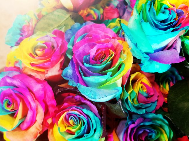 Rainbow roses at Eastern Market in Detroit, MI