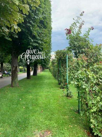 Vienna rose garten 2019