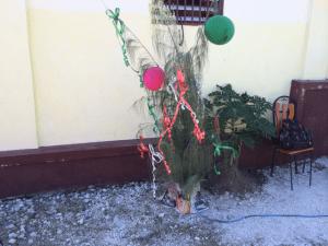 School Christmas tree.