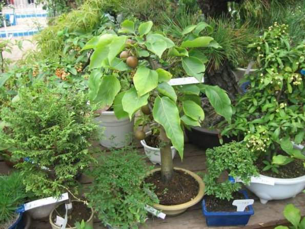 japanese-garden-plants