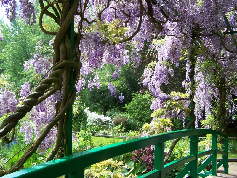 https://i1.wp.com/giverny-impression.com/gallery/water-garden/wisteria-bridge.jpg