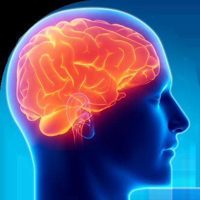 représentation du cerveau dans la tête d'un homme