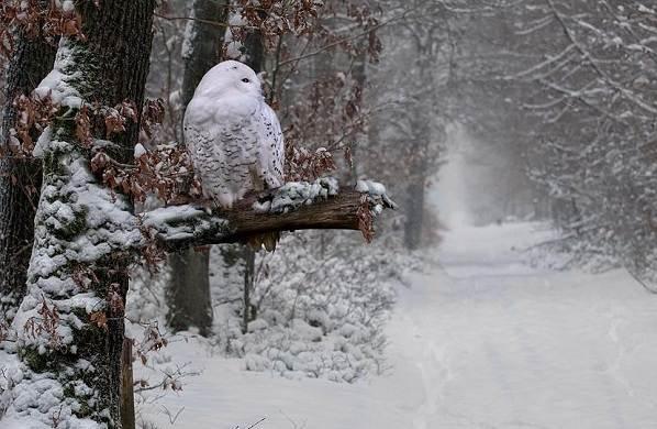 Зимующие-птицы-Названия-описания-и-особенности-зимующих-птиц-37