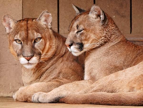 jesu li mjesta za upoznavanje cougar stvarna icarly spencer online upoznavanje